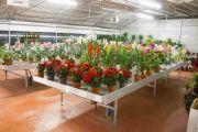 CASALGUIDI - fiori e piante